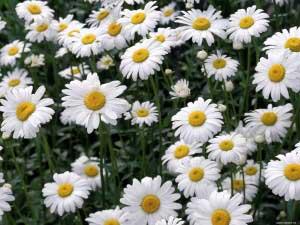 Применение цветков