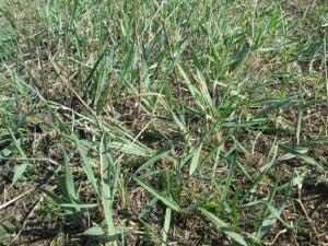 Чем полезна трава для женщин?