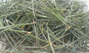 Сосновые иголки