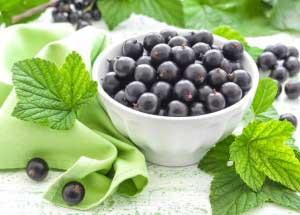 Польза ягод и листьев