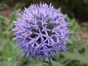 Помогает ли растение вылечить болезни?