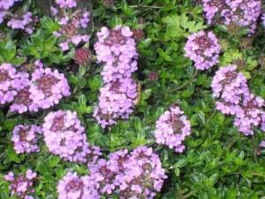 Польза и вред растения