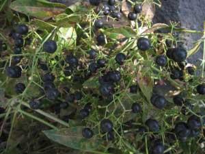 Какие травы от простатита нужно пить и как их приготовить