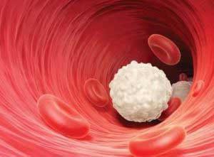 Что такое лейкоциты?