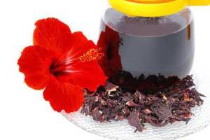 Цветки гибискуса для чая
