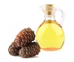 Полезно ли кедровое масло?